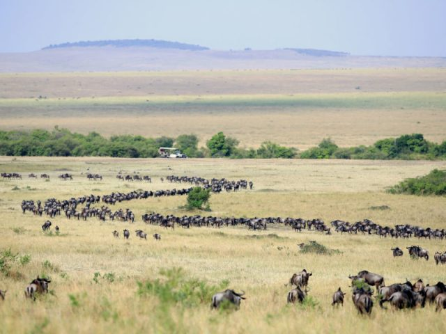 Increased tourist visit to the Maasai Mara