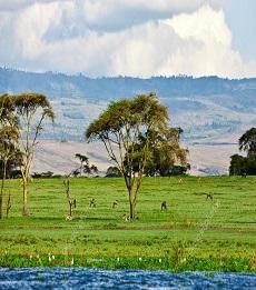 Maasai Mara Naivasha Safari