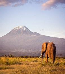 Amboseli and Naivasha Safari
