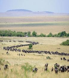 4 Nights Maasai Mara Safari