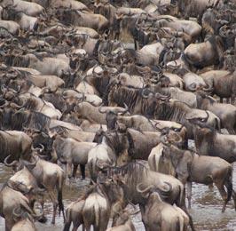3 Day Mara Safari