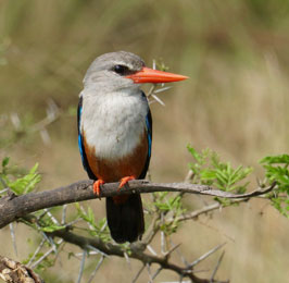 7 Days Bird Watching Safaris
