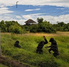 Chimpanzee Sanctuary Tour