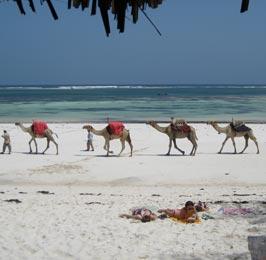 Kenya Adventure and Beach Safari
