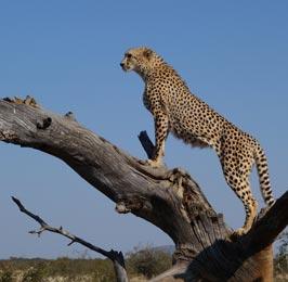 Kenya Wild Adventure Safari