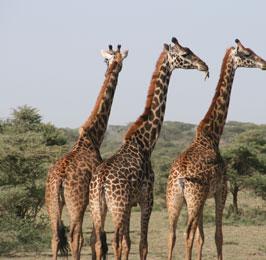 Magical Kenya Safari