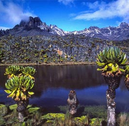 Mount Kenya and Chimpanzee Sanctuary Tour