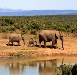 Samburu National Park Flying Package