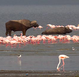 Lake Nakuru Day Tour
