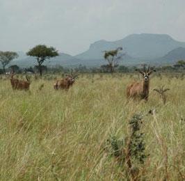 The Roan Antelope Safari
