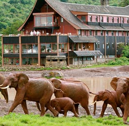 The Tree Honeymoon Safari
