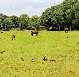 The Cradle of Mankind Safari