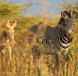 Lewa Downs Flying Safari