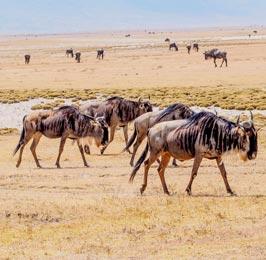 Mara and Zanzibar Flying Safari