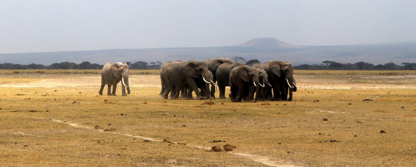 Amboseli National Park Flying Package
