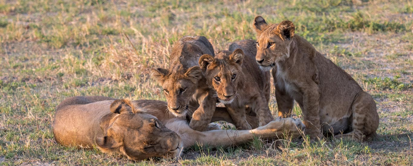 Victoria Falls & Beautiful Botswana Safari