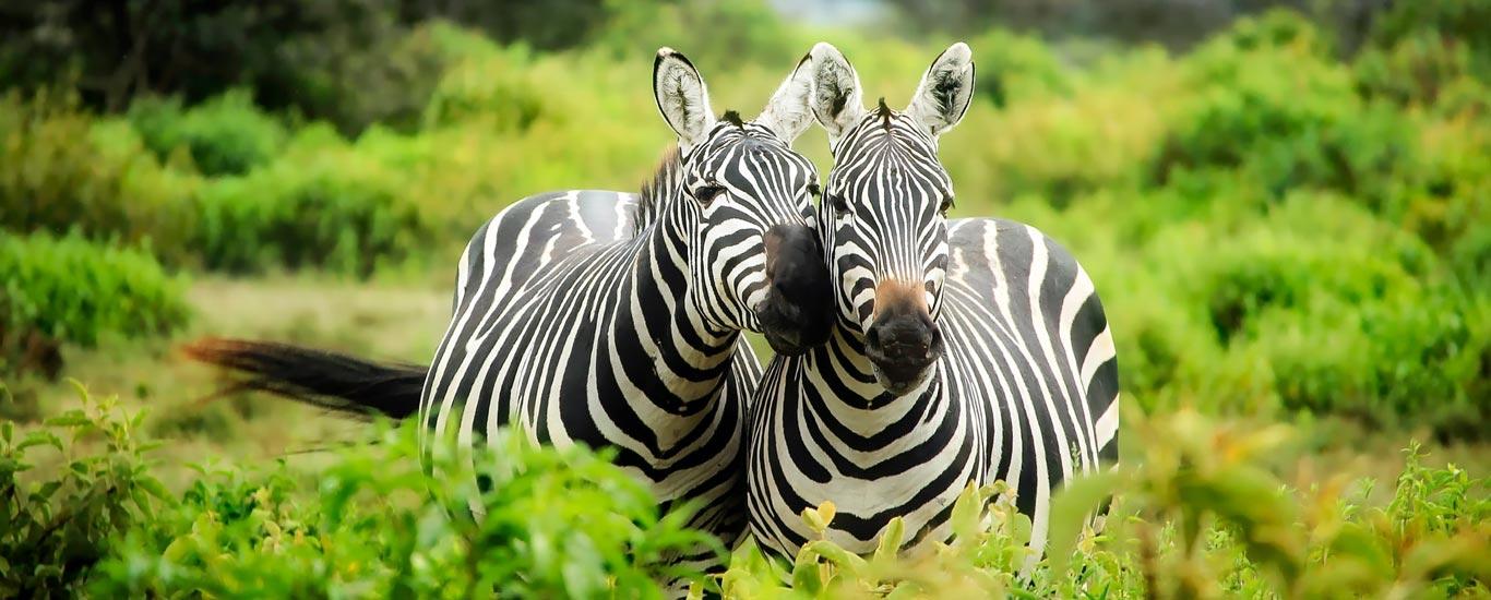Classic Kenya Tanzania Safari