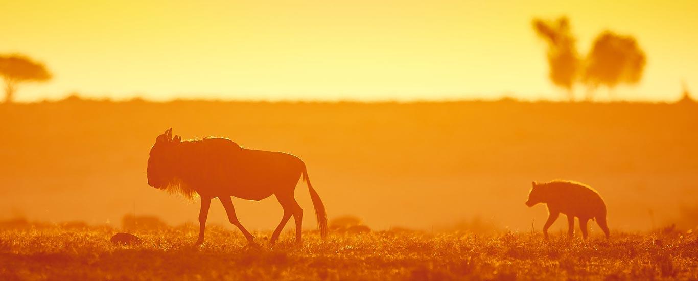Explore Mara/Serengeti Safari