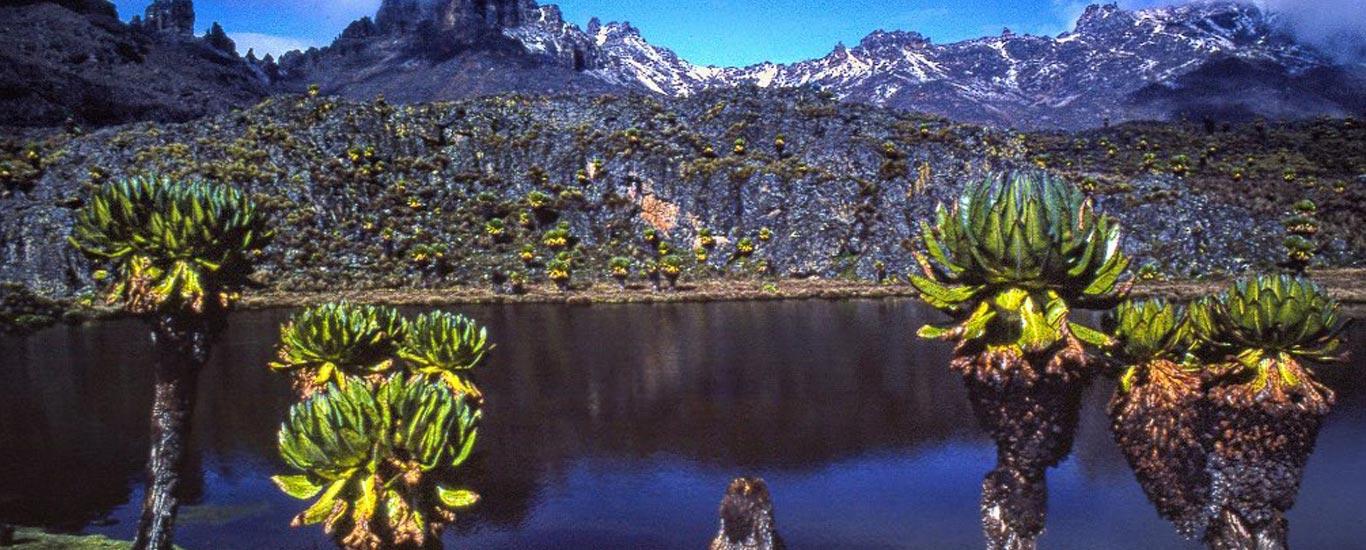 Mount Kenya and Chimpanzee Sanctuary Tour