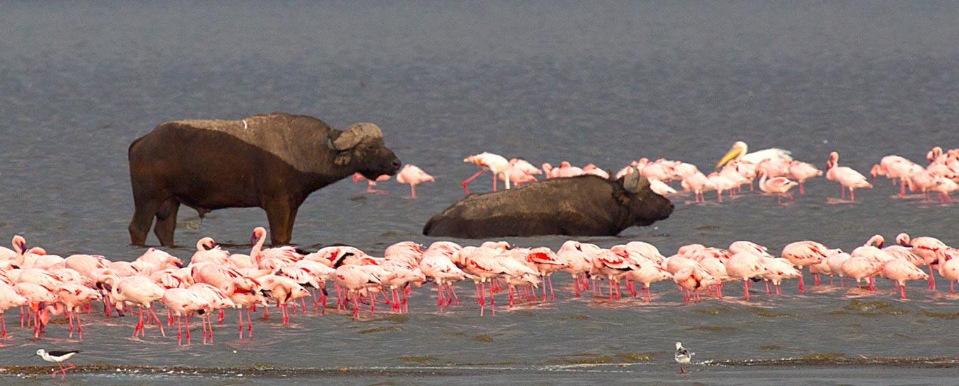 The Rift Valley Lakes Safari