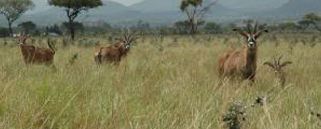 The Roan Antelope Safari