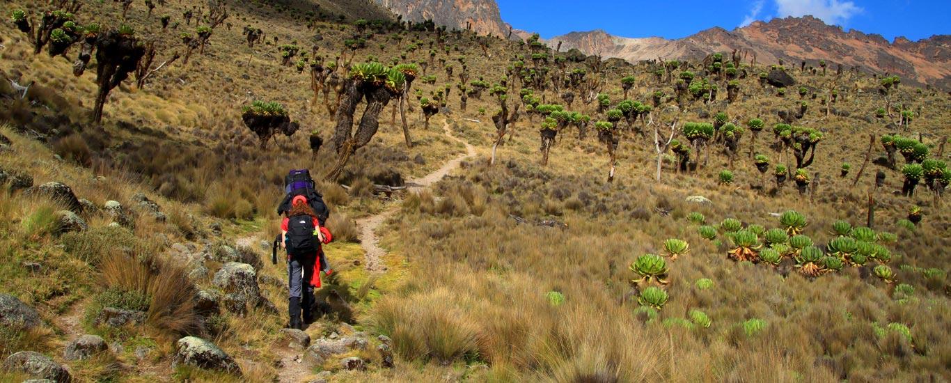 Marangu Route Mt. Kilimanjaro Tour